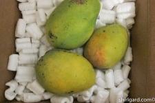 Florida Mangoes