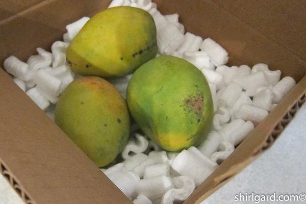 Box of Mangoes from Florida