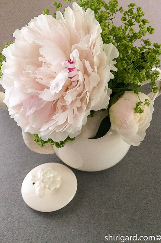 A Pitcher of Peonies